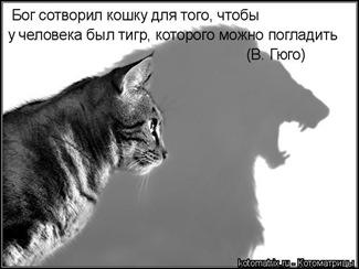 koto_04
