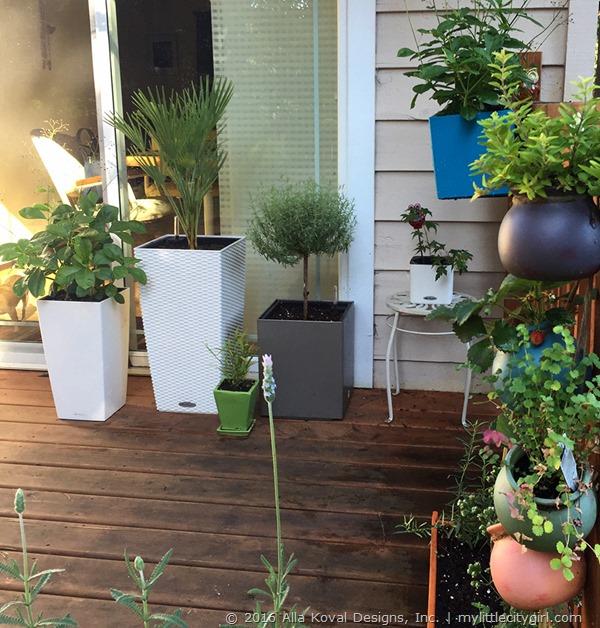 Garden Update07